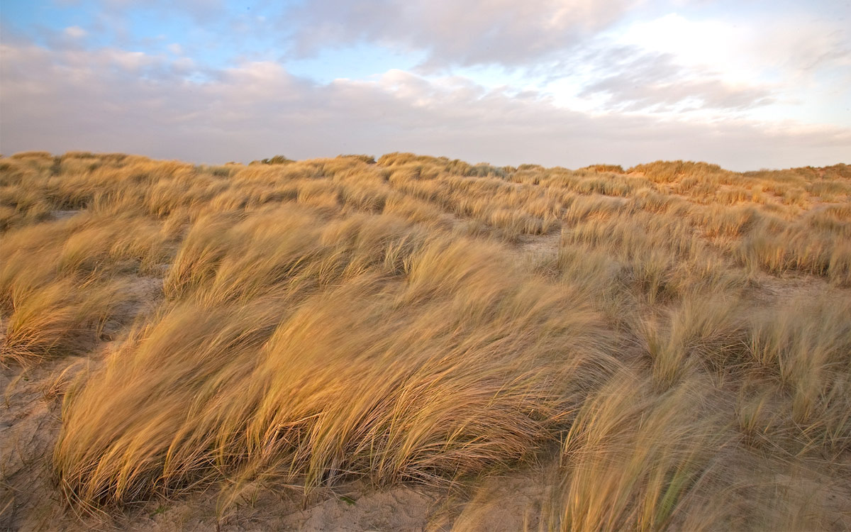 Sand dunes in Norfolk, UK