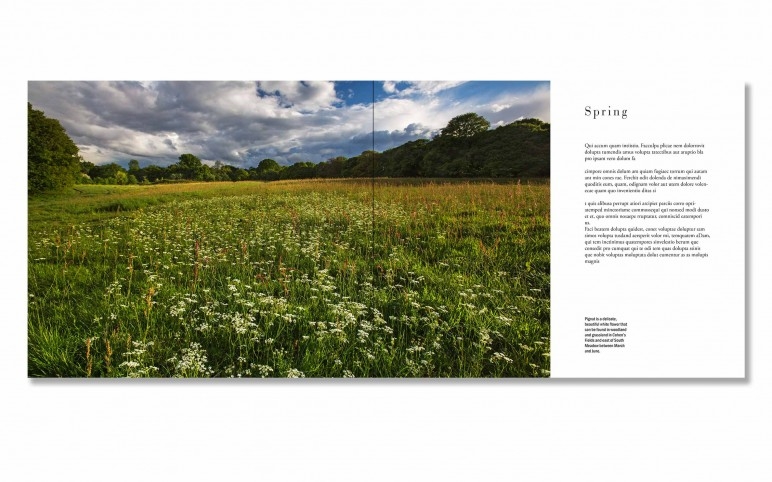 Hampstead Heath Book Spreads taster